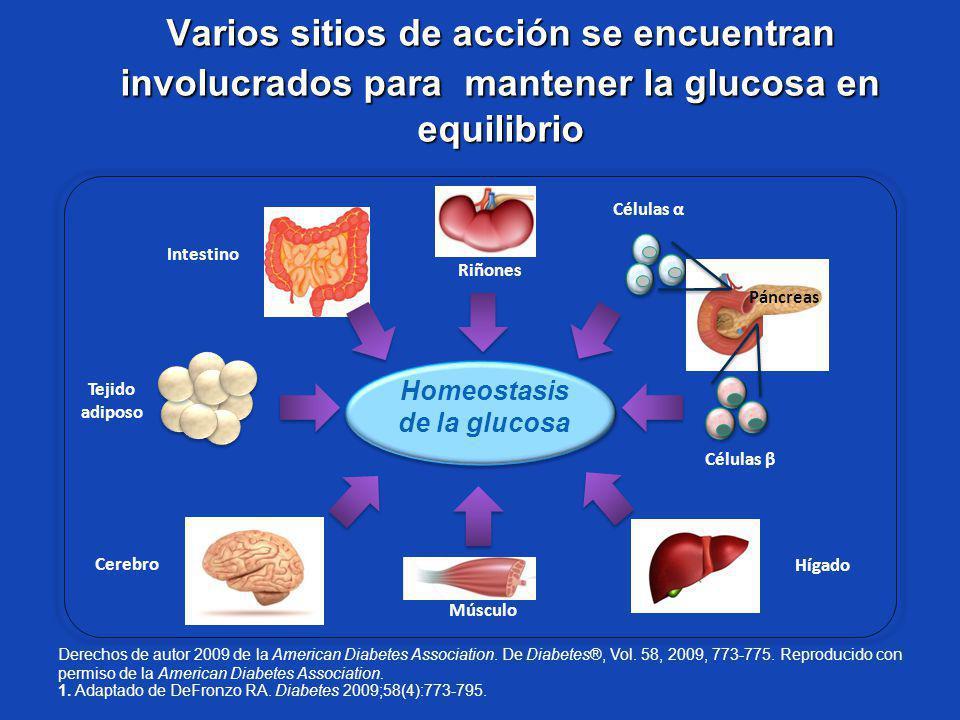 Homeostasis de la glucosa