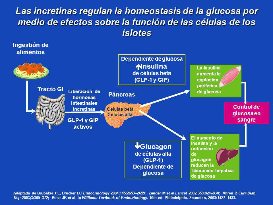 Las incretinas regulan la homeostasis de la glucosa por medio de efectos sobre la función de las células de los islotes