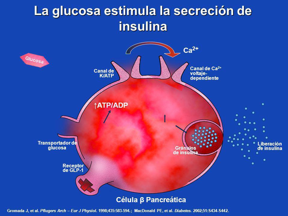 La glucosa estimula la secreción de insulina