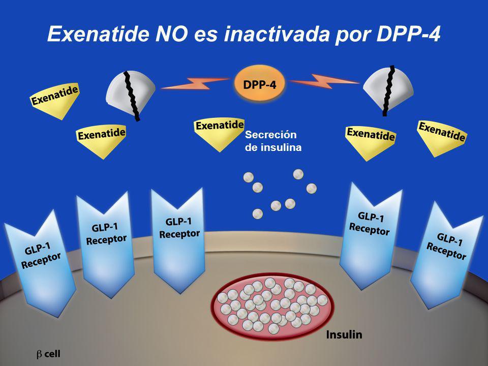 Exenatide NO es inactivada por DPP-4
