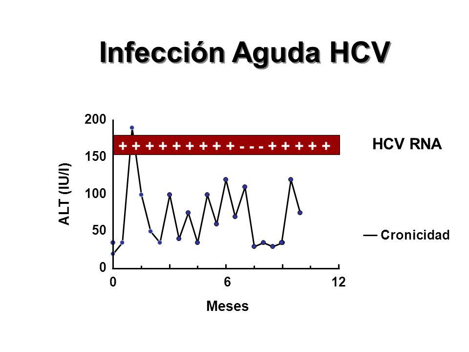 Infección Aguda HCV HCV RNA + + + + + + + + + - - - + + + + +