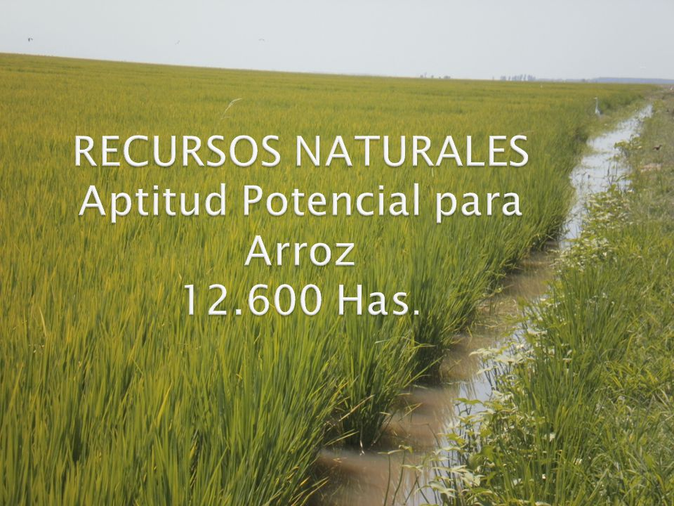 RECURSOS NATURALES Aptitud Potencial para Arroz 12.600 Has.