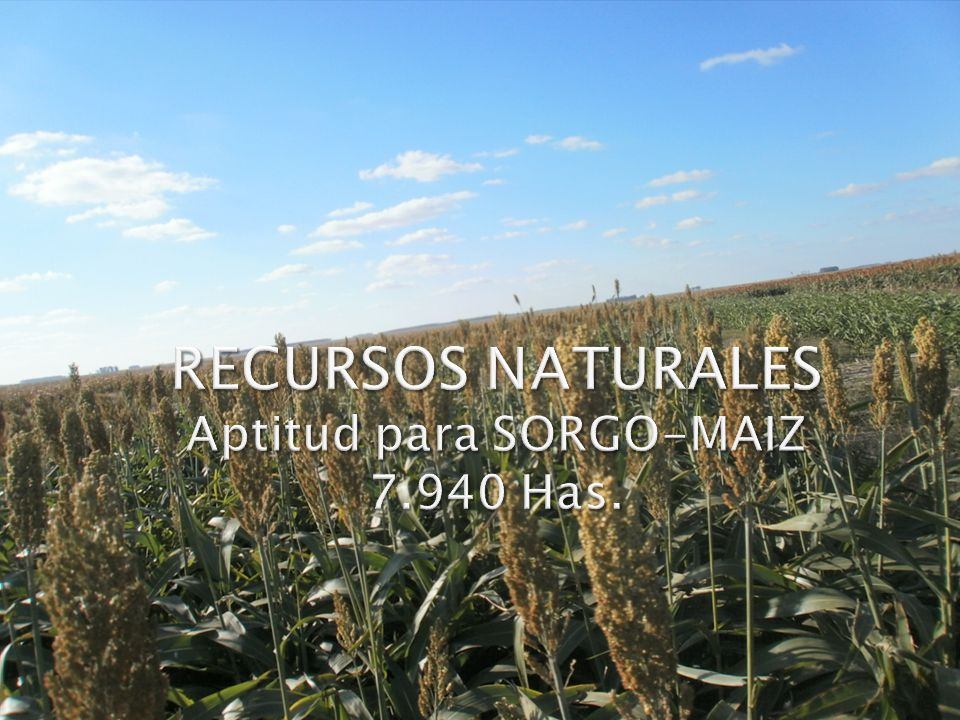 RECURSOS NATURALES Aptitud para SORGO-MAIZ 7.940 Has.