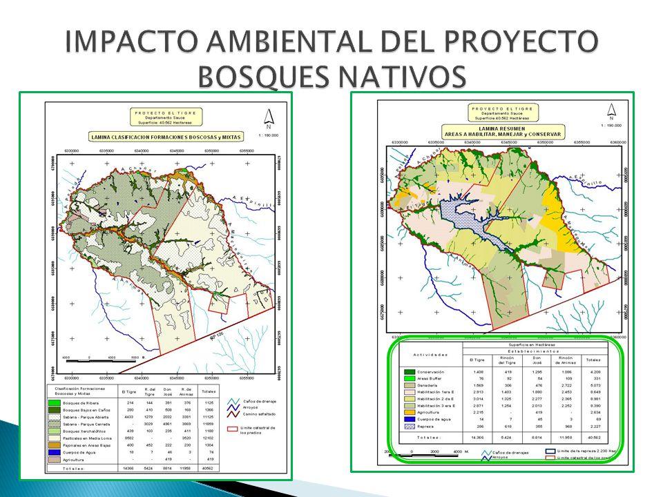 IMPACTO AMBIENTAL DEL PROYECTO BOSQUES NATIVOS