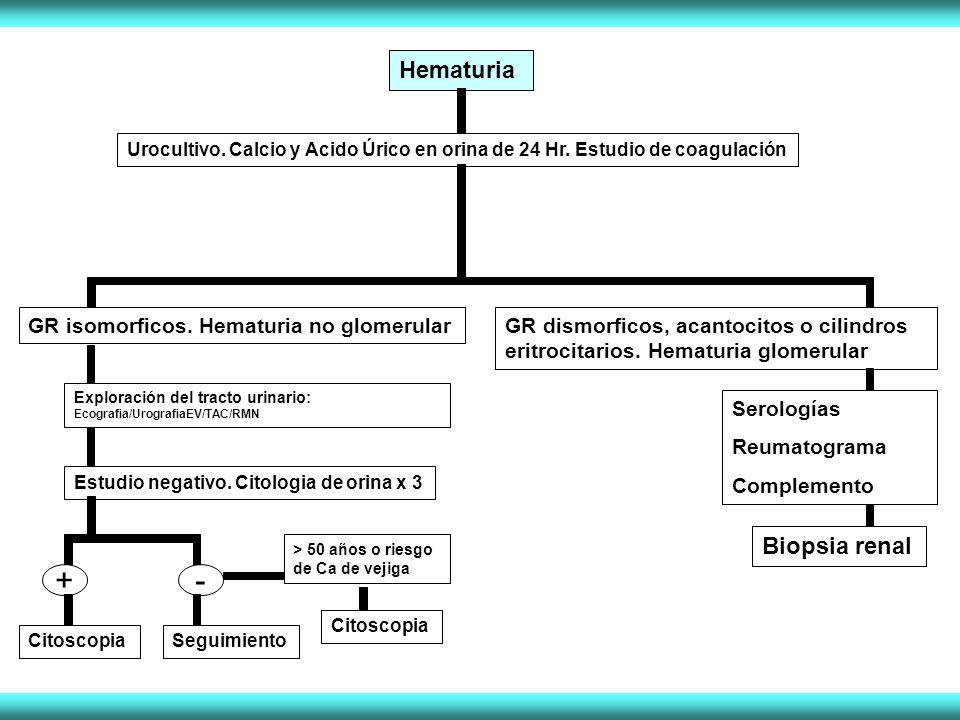 + - Hematuria Biopsia renal GR isomorficos. Hematuria no glomerular