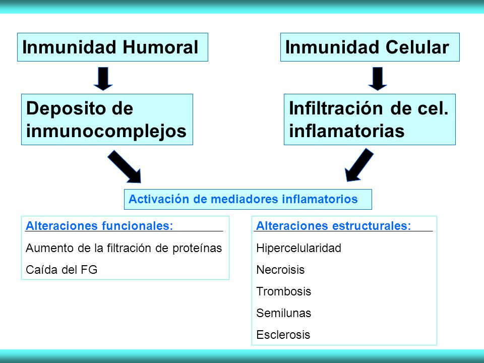 Deposito de inmunocomplejos Infiltración de cel. inflamatorias
