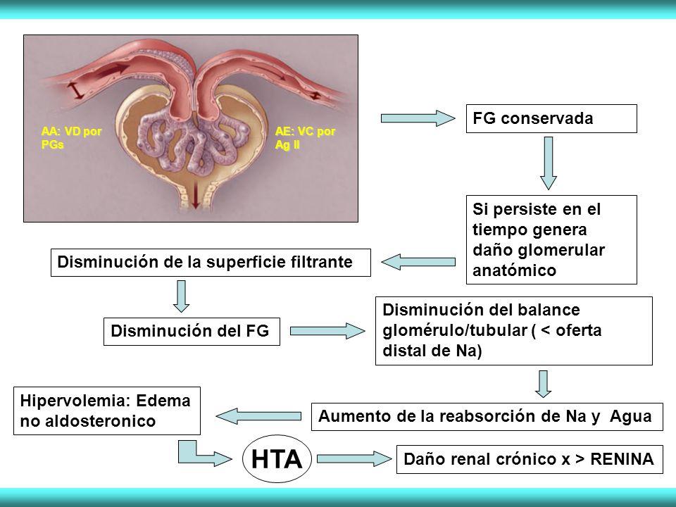 FG conservada AA: VD por PGs. AE: VC por Ag II. Si persiste en el tiempo genera daño glomerular anatómico.