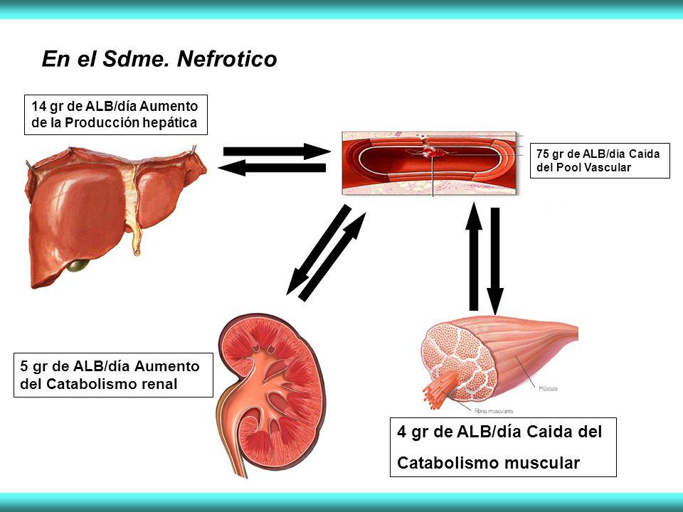 En el Sdme. Nefrotico 4 gr de ALB/día Caida del Catabolismo muscular