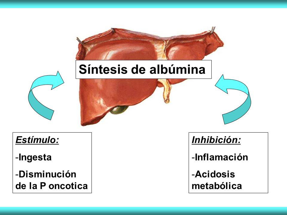 Síntesis de albúmina Estímulo: Ingesta Disminución de la P oncotica