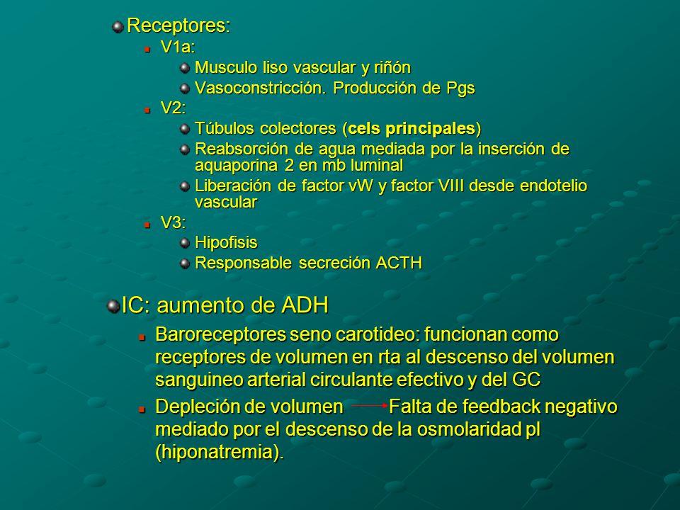IC: aumento de ADH Receptores: