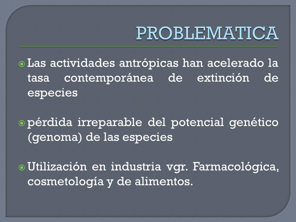 PROBLEMATICA Las actividades antrópicas han acelerado la tasa contemporánea de extinción de especies.