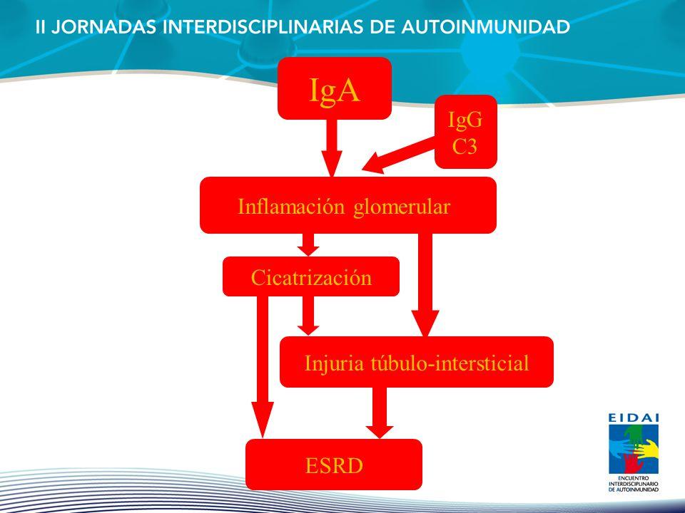 IgA IgG C3 Inflamación glomerular Cicatrización