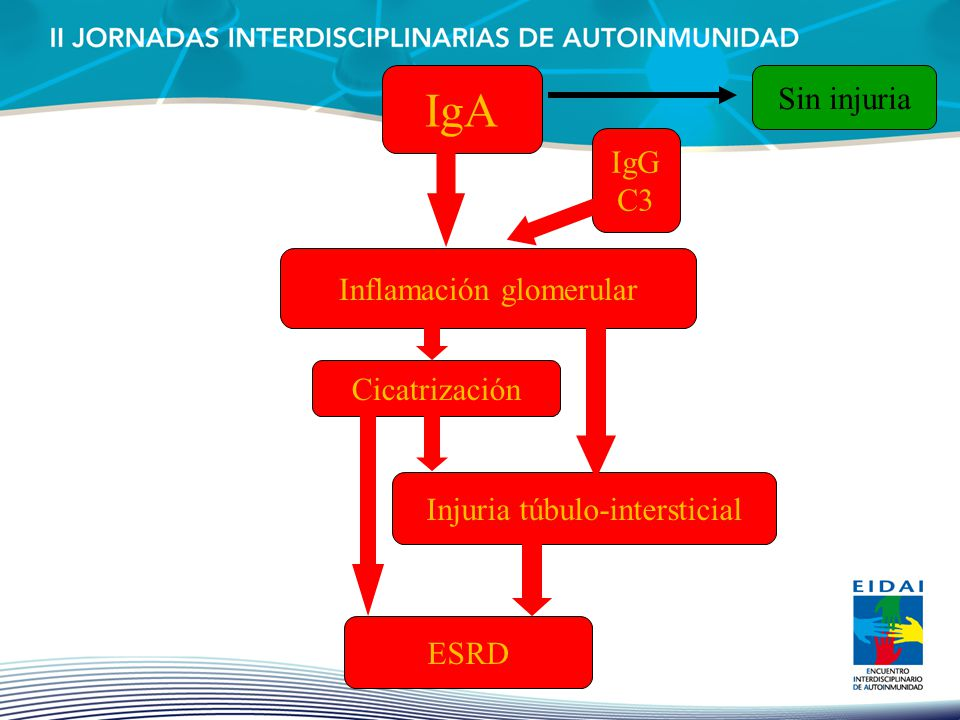 IgA Sin injuria IgG C3 Inflamación glomerular Cicatrización