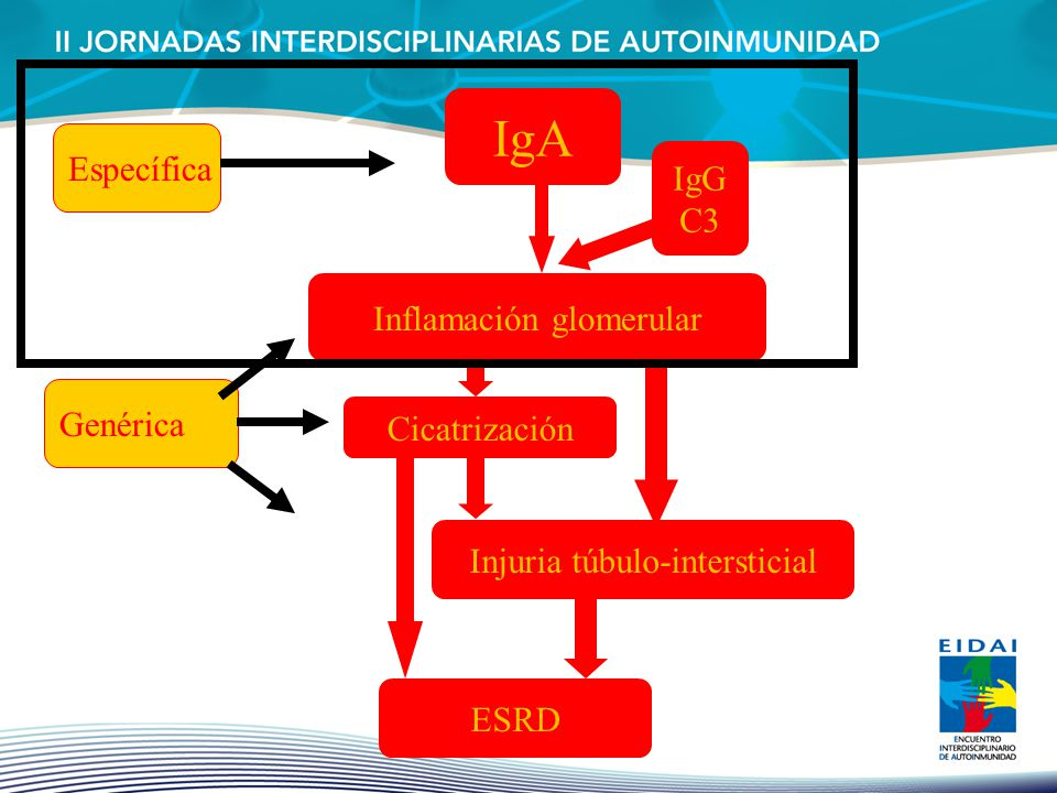 IgA Específica IgG C3 Inflamación glomerular Genérica Cicatrización