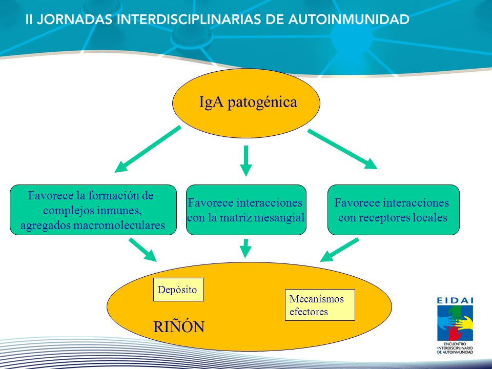 IgA patogénica RIÑÓN Favorece la formación de complejos inmunes,