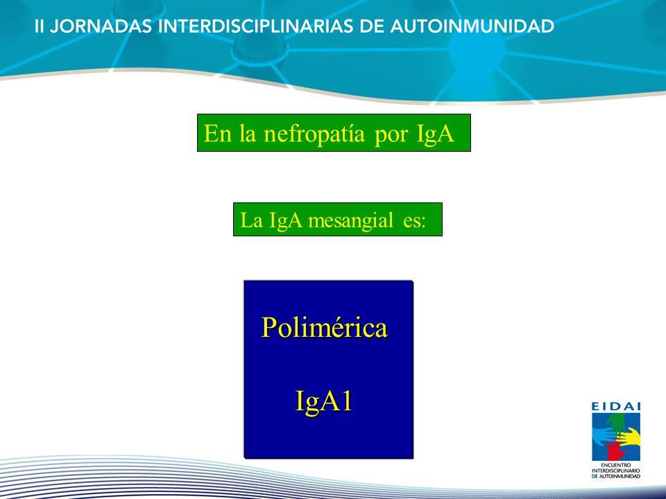 En la nefropatía por IgA
