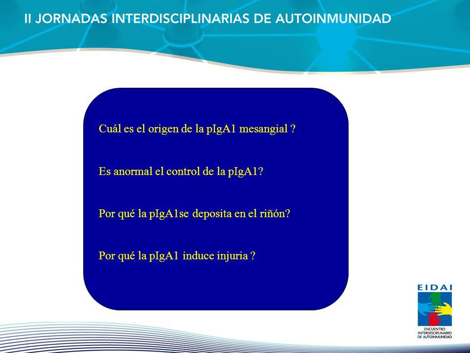 Cuál es el origen de la pIgA1 mesangial