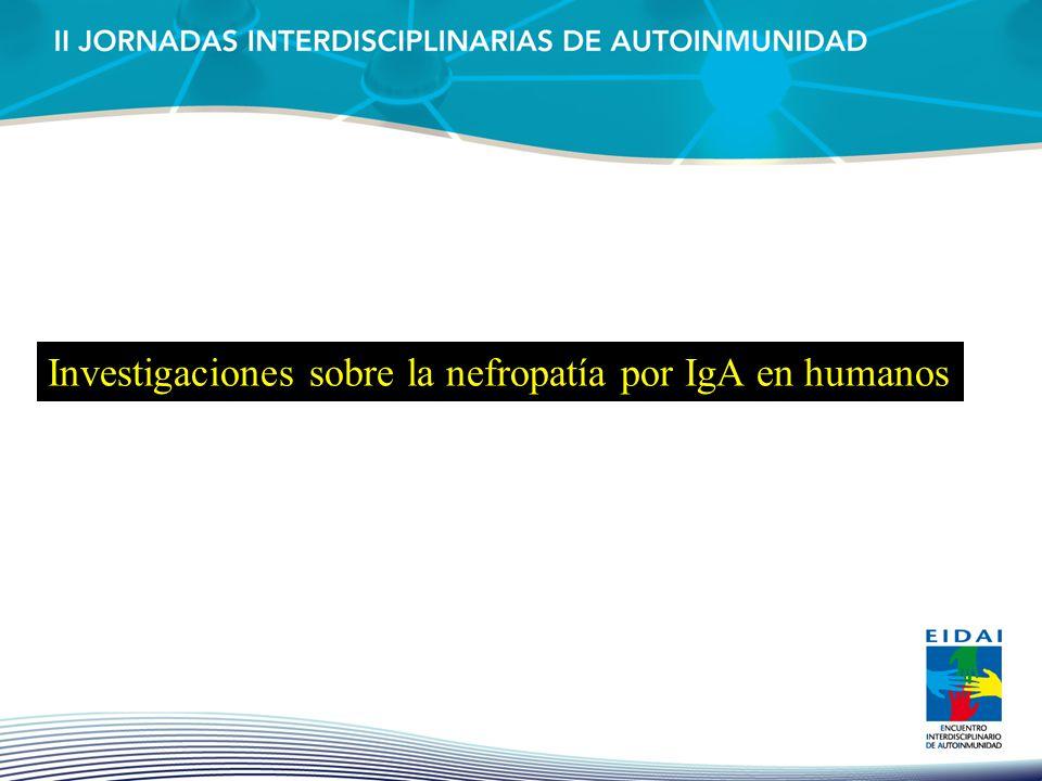 Investigaciones sobre la nefropatía por IgA en humanos