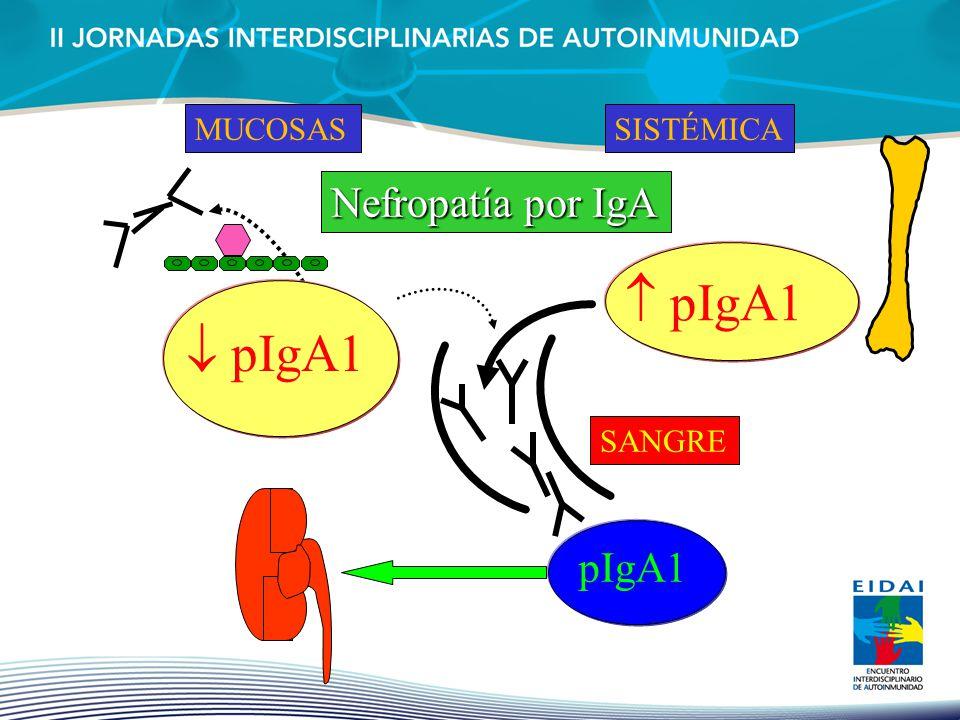  pIgA1  pIgA1 Nefropatía por IgA IgA Nephropathy pIgA1 MUCOSAS
