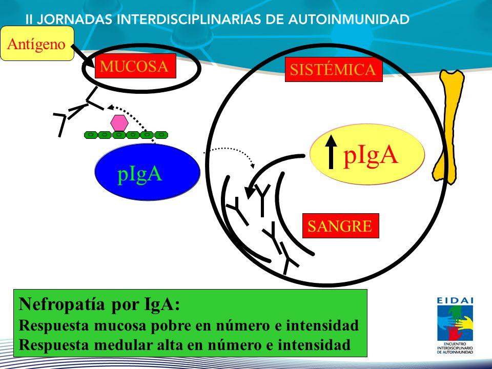 pIgA pIgA Nefropatía por IgA: Antígeno MUCOSA SISTÉMICA SANGRE