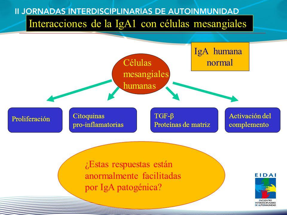 Interacciones de la IgA1 con células mesangiales