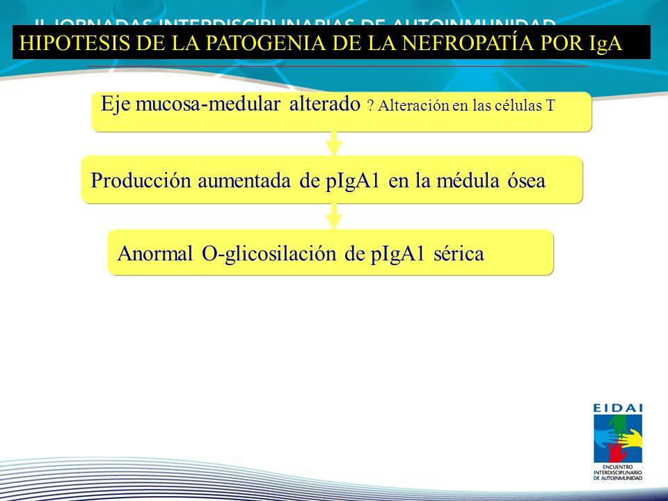 HIPOTESIS DE LA PATOGENIA DE LA NEFROPATÍA POR IgA