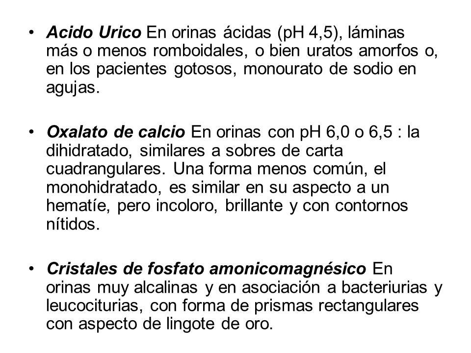 Acido Urico En orinas ácidas (pH 4,5), láminas más o menos romboidales, o bien uratos amorfos o, en los pacientes gotosos, monourato de sodio en agujas.
