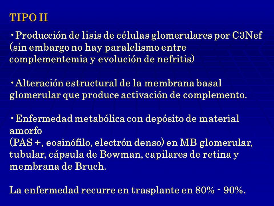 TIPO II Producción de lisis de células glomerulares por C3Nef