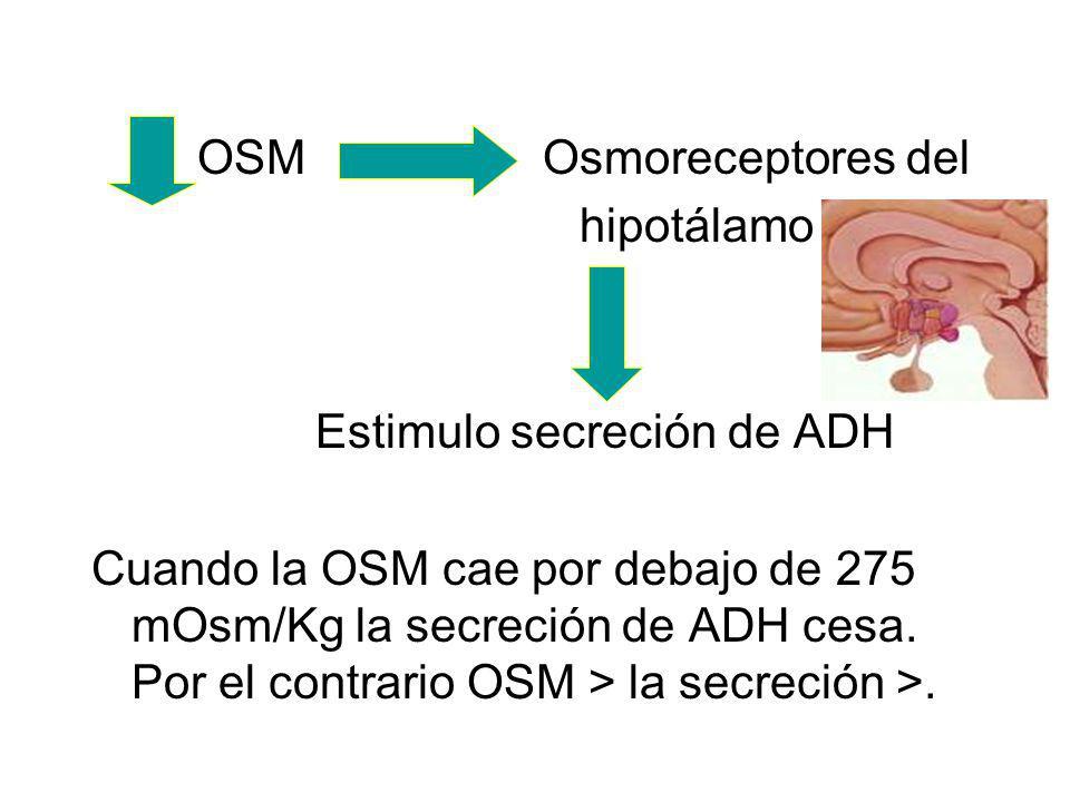 OSM Osmoreceptores del