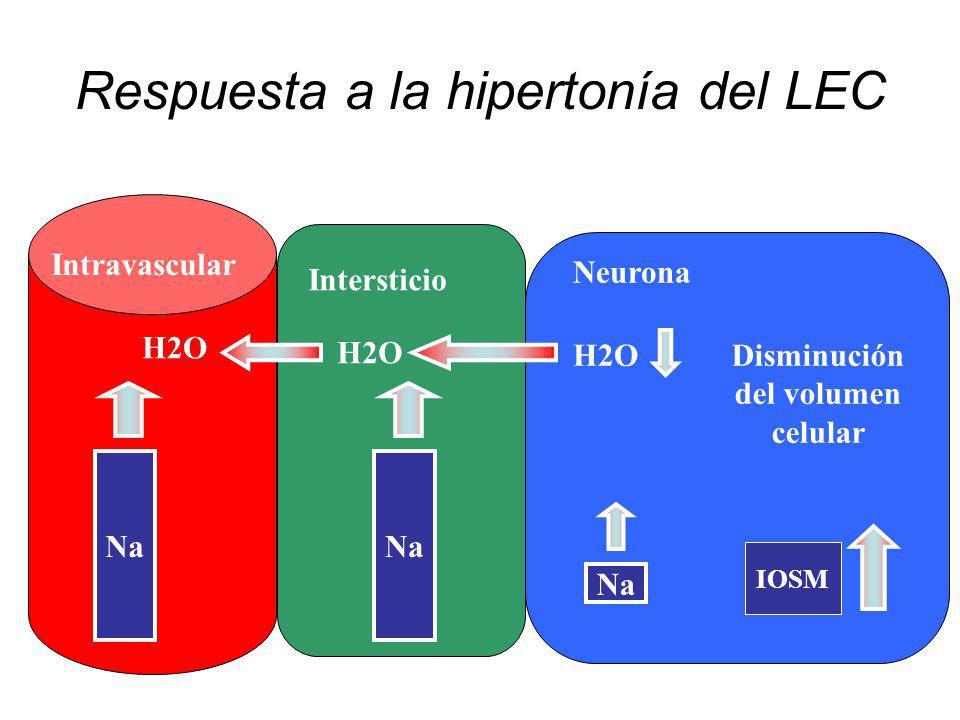 Respuesta a la hipertonía del LEC