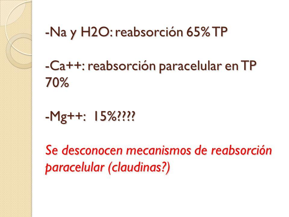 -Na y H2O: reabsorción 65% TP -Ca++: reabsorción paracelular en TP 70% -Mg++: 15% .