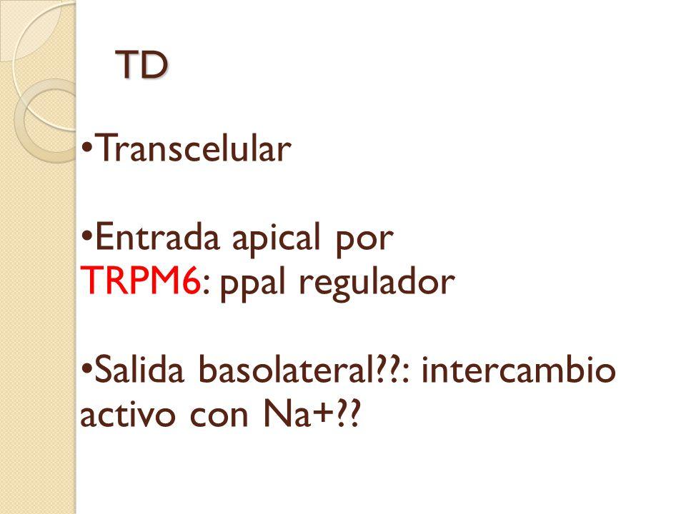TD Transcelular. Entrada apical por. TRPM6: ppal regulador.