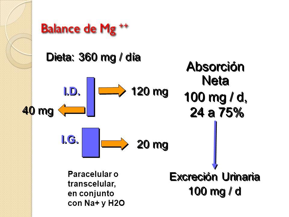 Balance de Mg ++ Absorción Neta 100 mg / d, 24 a 75%
