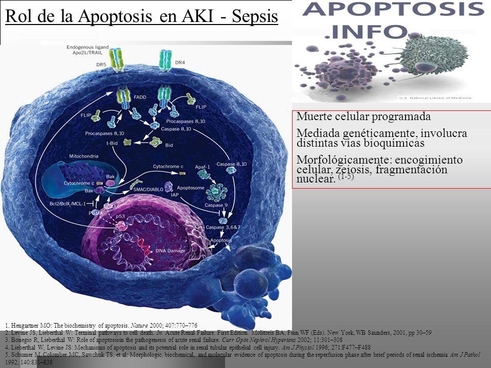 Rol de la Apoptosis en AKI - Sepsis
