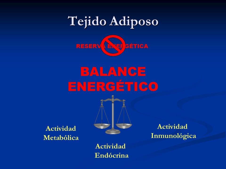 Tejido Adiposo BALANCE ENERGÉTICO Actividad Actividad Inmunológica