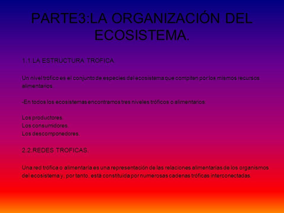 PARTE3:LA ORGANIZACIÓN DEL ECOSISTEMA.