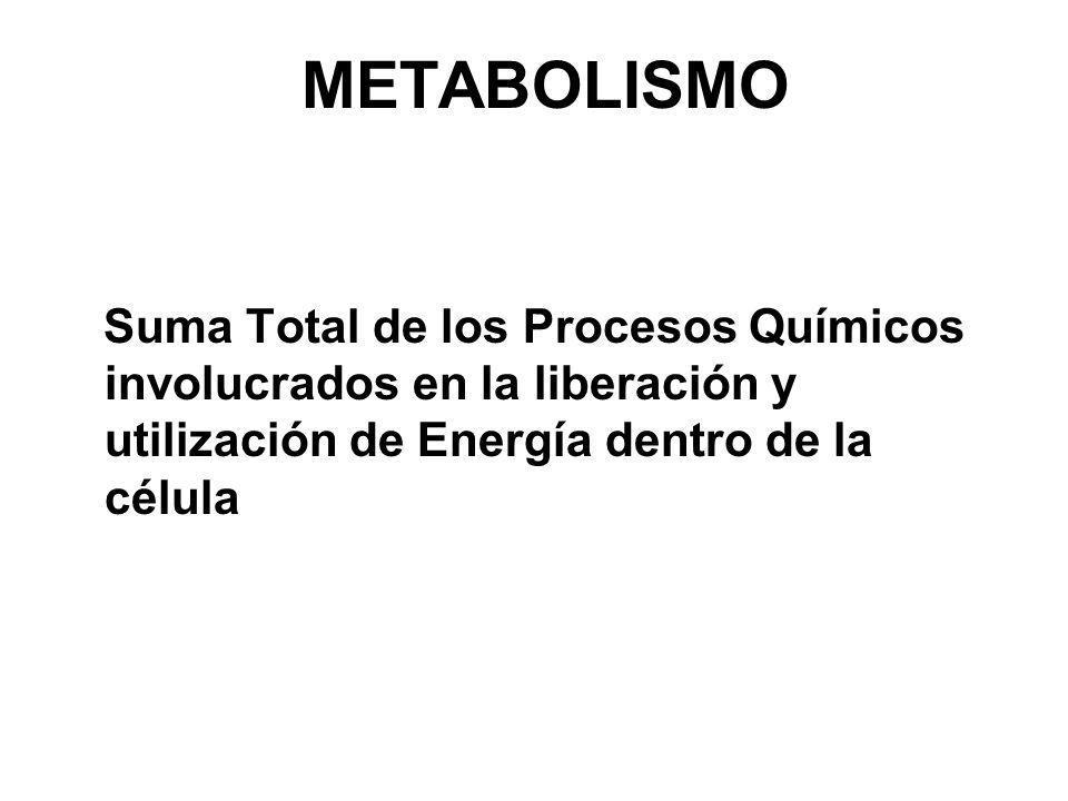 METABOLISMO Suma Total de los Procesos Químicos involucrados en la liberación y utilización de Energía dentro de la célula.