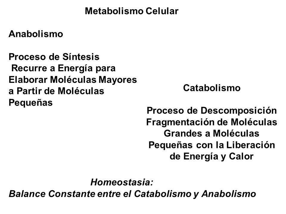 Elaborar Moléculas Mayores a Partir de Moléculas Pequeñas