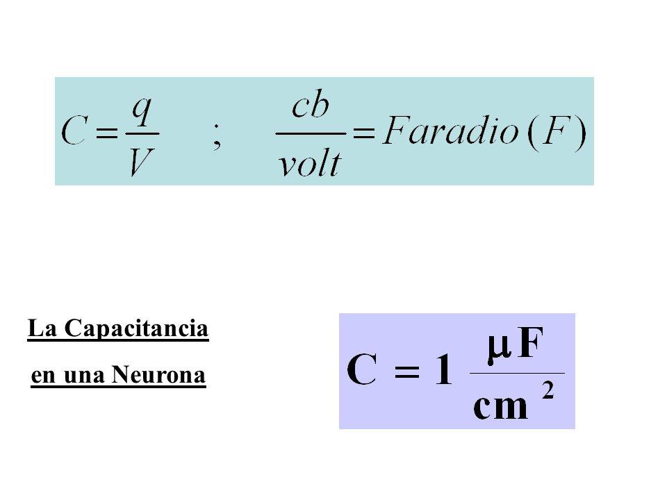 La Capacitancia en una Neurona