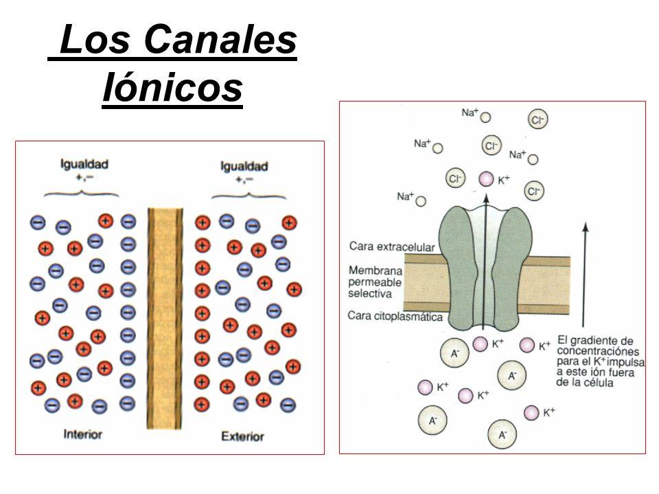 Los Canales Iónicos