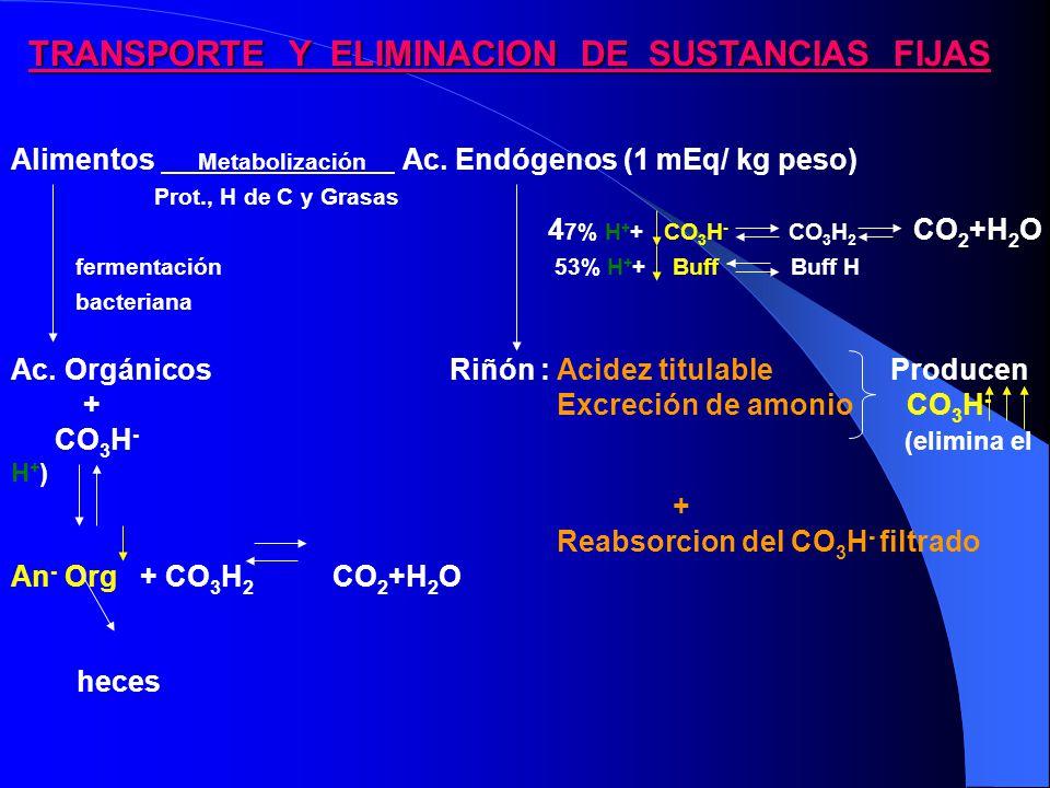 Alimentos Metabolización Ac. Endógenos (1 mEq/ kg peso)