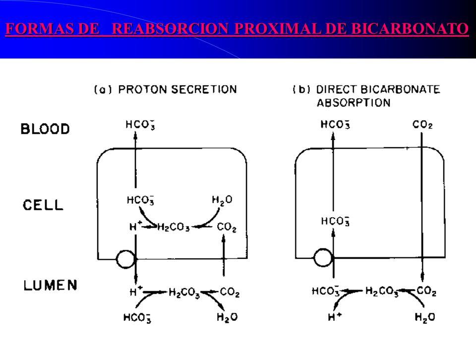 FORMAS DE REABSORCION PROXIMAL DE BICARBONATO