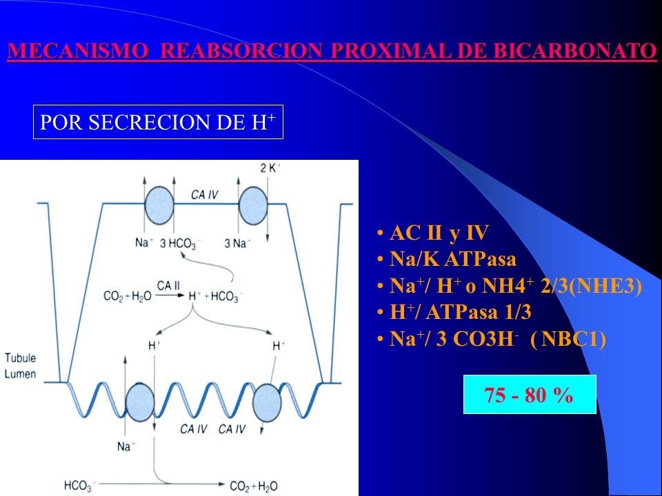 MECANISMO REABSORCION PROXIMAL DE BICARBONATO