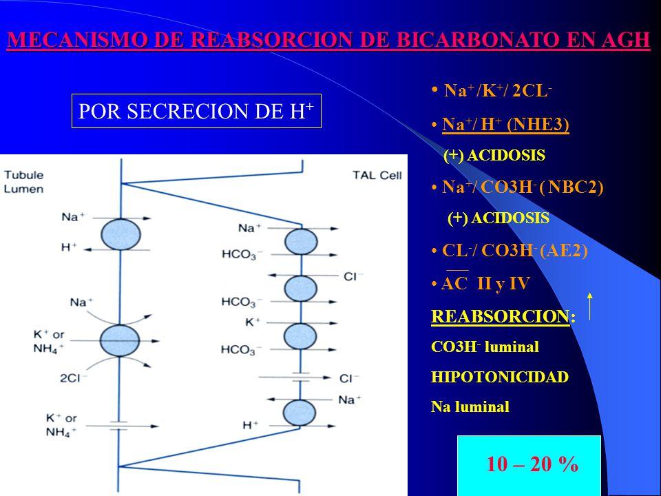 MECANISMO DE REABSORCION DE BICARBONATO EN AGH
