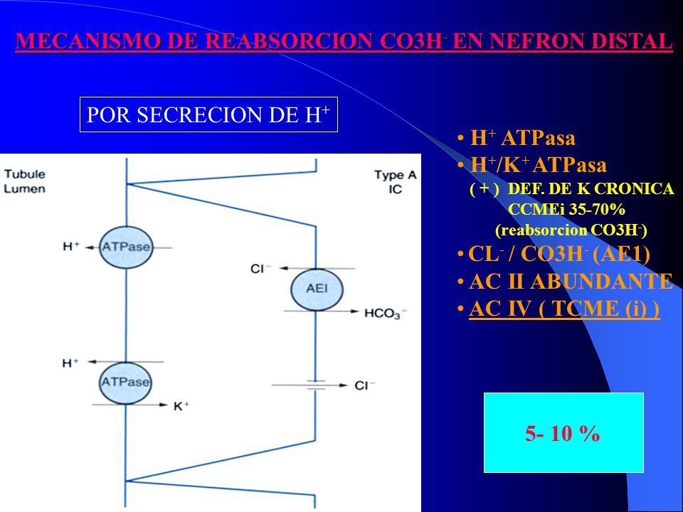 MECANISMO DE REABSORCION CO3H- EN NEFRON DISTAL