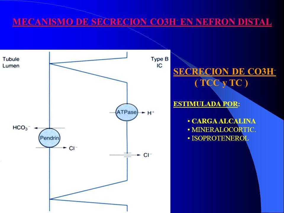 MECANISMO DE SECRECION CO3H- EN NEFRON DISTAL