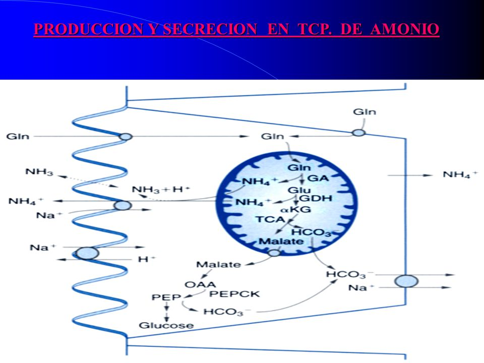 PRODUCCION Y SECRECION EN TCP. DE AMONIO