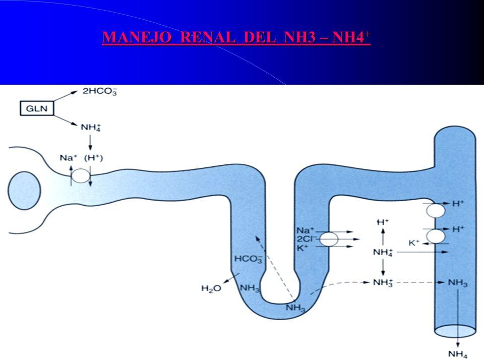 MANEJO RENAL DEL NH3 – NH4+
