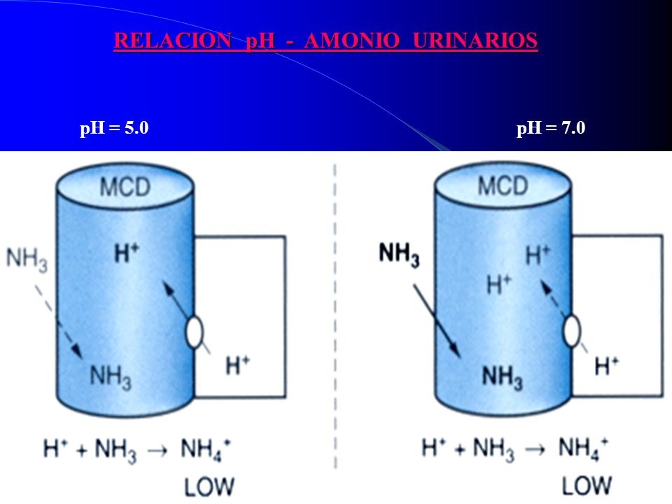 RELACION pH - AMONIO URINARIOS