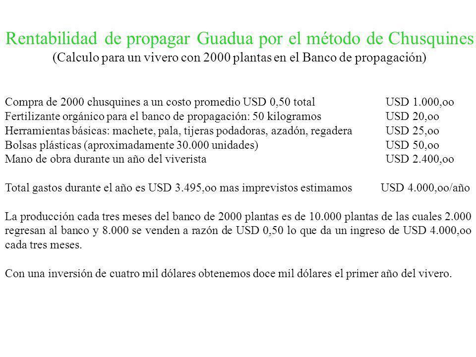 Rentabilidad de propagar Guadua por el método de Chusquines